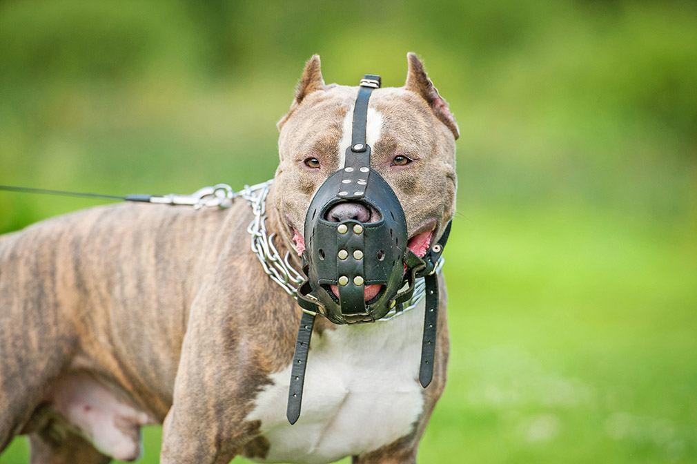Contratar seguro para perros
